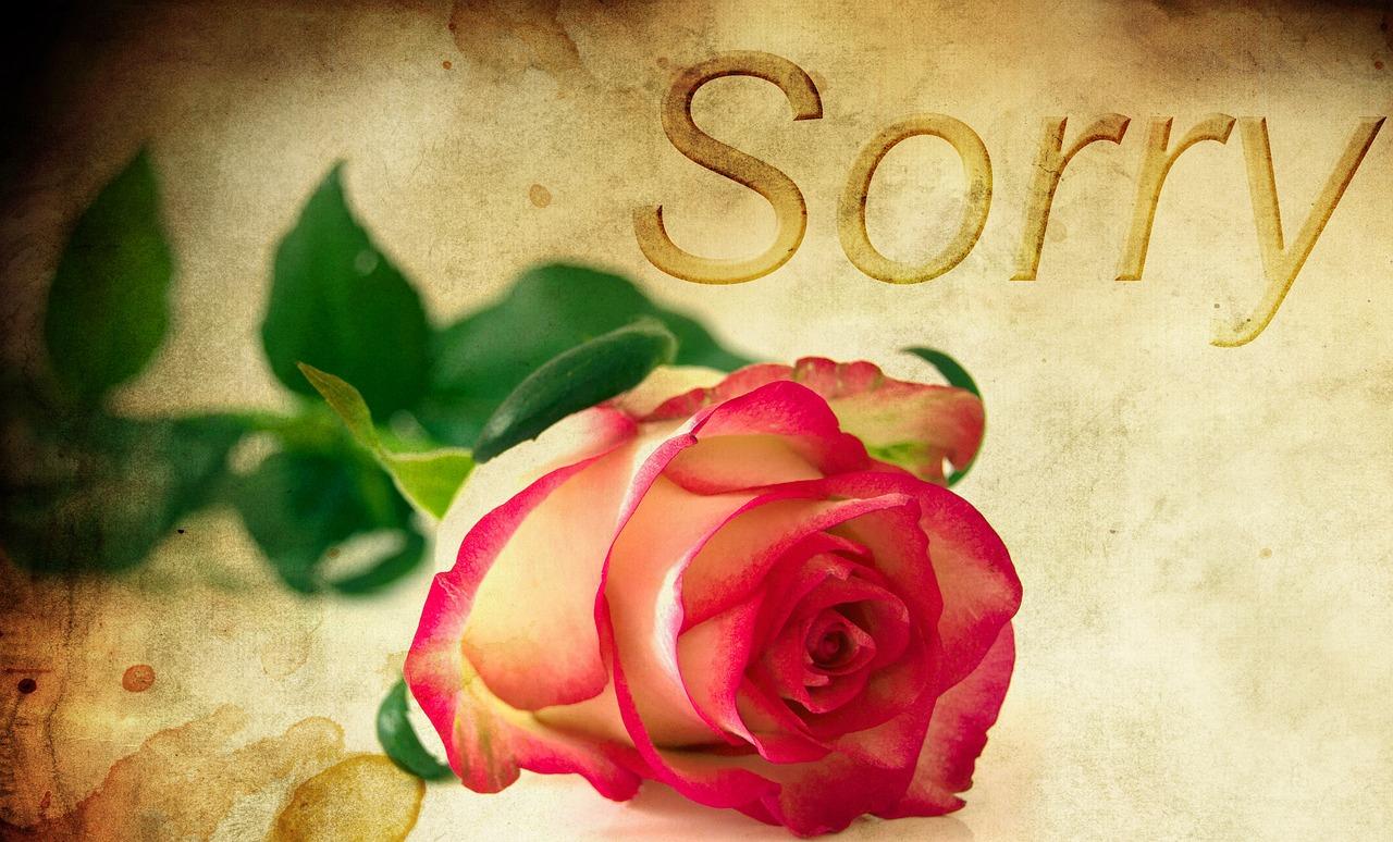 роза как просьба о прощении