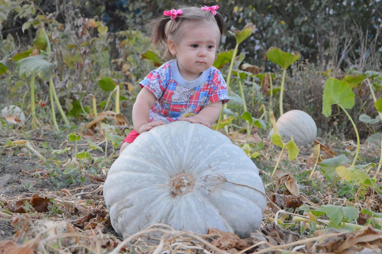 маленькая девочка катит большую тыкву